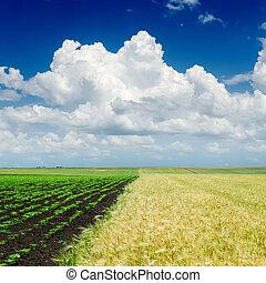 Cielo nublado sobre campos de agricultura