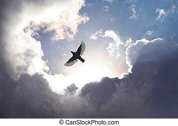 cielo, pájaro, ángel