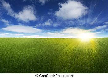 Cielo soleado sobre el prado