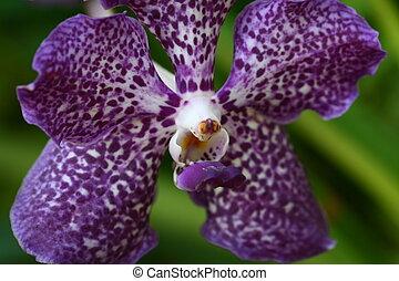 Cierra la orquídea en el jardín, flor colorida