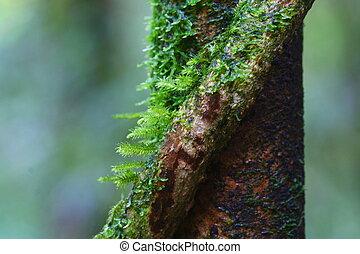 Cierra musgo en el árbol