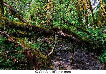 cierre, crecer, branches., árbol, arriba, musgo