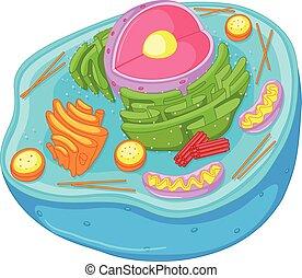 Cierre el diagrama de células animales