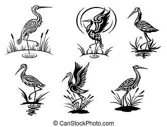 Cigüeña, garza, grulla y pájaros