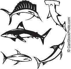 Cinco peces grandes del océano
