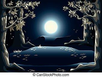 claro, bosque, noche