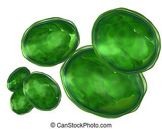 Cloruoplastos aislados en blanco