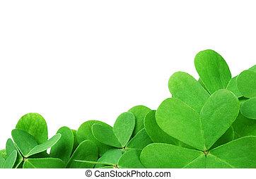 Clover verde