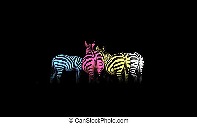 cmyk, coloreado, cebras