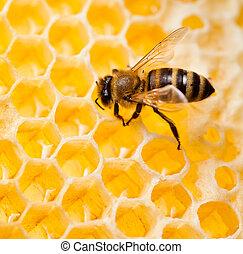 cobrar, tiro, macro, abeja, miel, panal