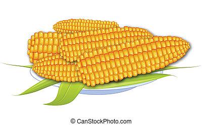 cocinó maíz