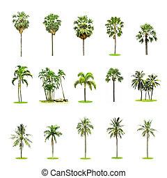 coco, conjunto, árboles de palma