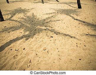 coco, sombra, árbol