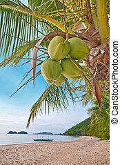 Cocos en una palma