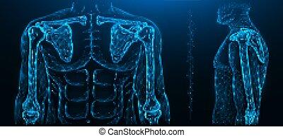 codo, humano, polygonal, musculoskeletal, ilustración, modelo, joint., coyuntura, vector, hombro, sistema