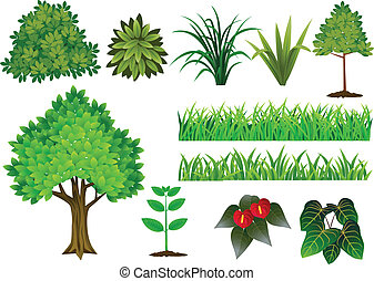 colección, árbol, planta