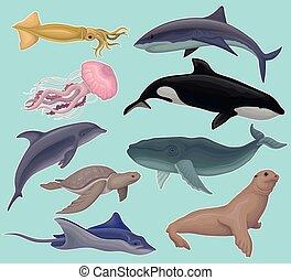 Colección de animales marinos, peces marinos y criaturas calamares, medusas, orcas, tortugas, peces, rayas, vectores marinos ilustraciones