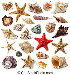 Colección de conchas marinas