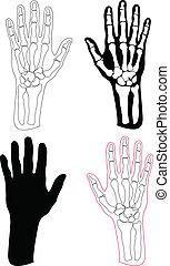 Colección de manos y huesos humanos
