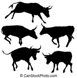 Colección de silueta de toro