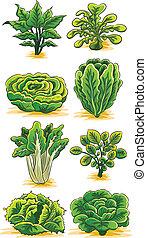 Colección de verduras verdes