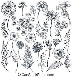 colección, plantas, mano, dibujado, flores