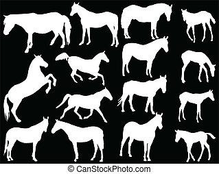 Coleccion de caballos, vector