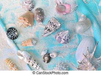 Coleccion de conchas en la arena en una toalla de playa azul