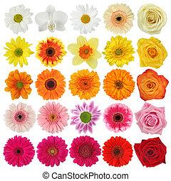 Coleccion de flores