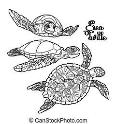 Coleccion de tortugas marinas Hawksbill