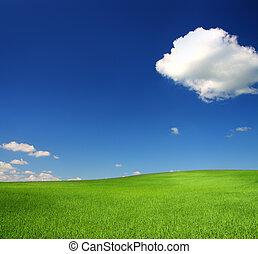 Colina verde con trigo bajo el cielo azul