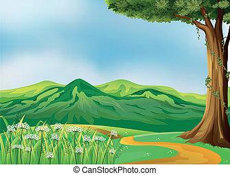 colinas, camino