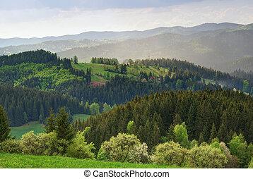 colinas, campo, bosques, verde, tierras altas, praderas