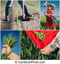 Collage de agricultura
