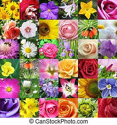 Collage de diferentes hermosas flores