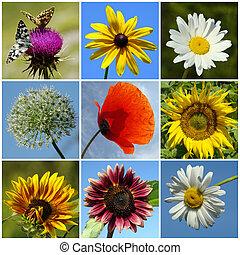 Collage de flores rurales coloridas