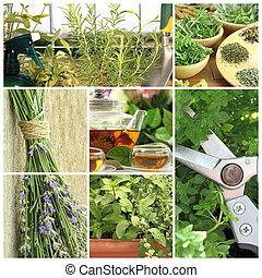 Collage de hierbas frescas en el jardín del balcón