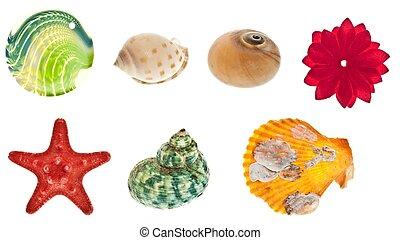 Collage de objetos marinos
