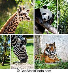 collage, fotos, seis, zoo