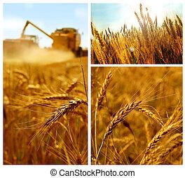 collage, grano