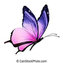 color mariposa, blanco, vuelo, aislado