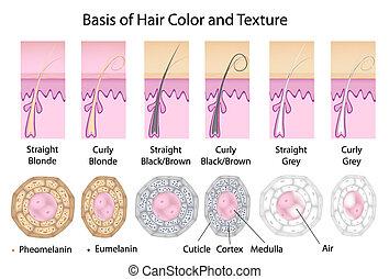 color pelo, diferente, textura