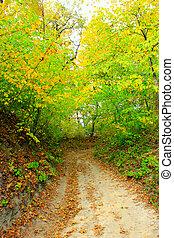 Colores de otoño con bosque y arbustos de árboles