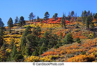 Colores de otoño en la cima de la montaña