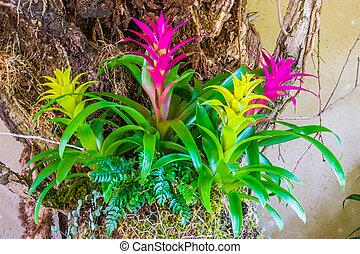 Coloridas flores de guzmania en los colores rosa y amarillo, plantas artificiales decorativas tropicales