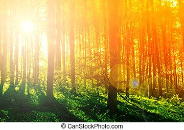 Colorido bosque místico con rayos solares por la mañana