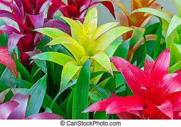 colorido, bromelia, florecer, floral, flowers., plano de fondo