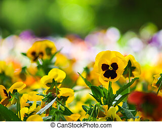 Colorido campo de flores