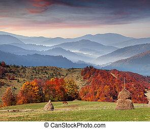 colorido, carpathian, otoño, ucrania, ocaso, europe., montañas.