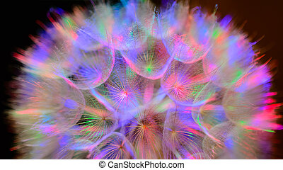 Colorido suelo pastel, vívida flor de diente de león abstracto